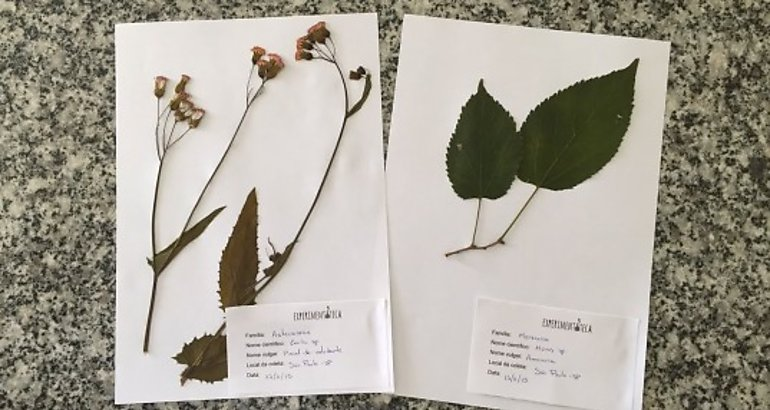 herbario-universidad-panama-2018